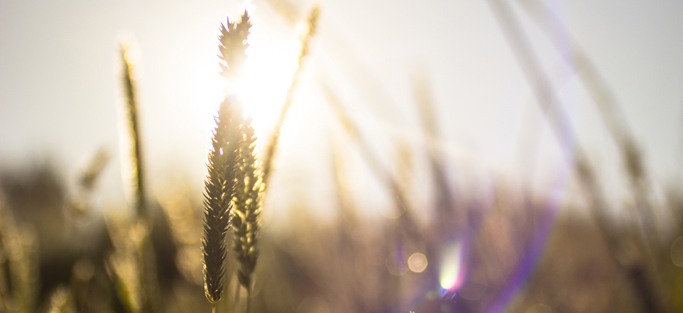nuove-tecnologie-in-agricoltura