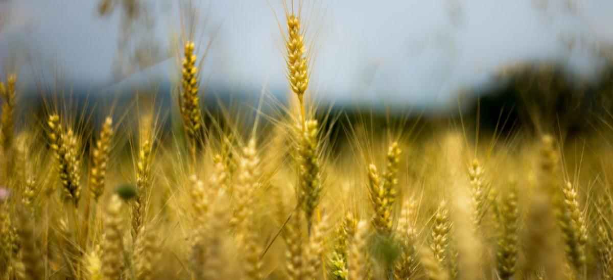 qualità-stile-agricoltura-la-chiave-del-successo-per-un-imprenditore-agricolo