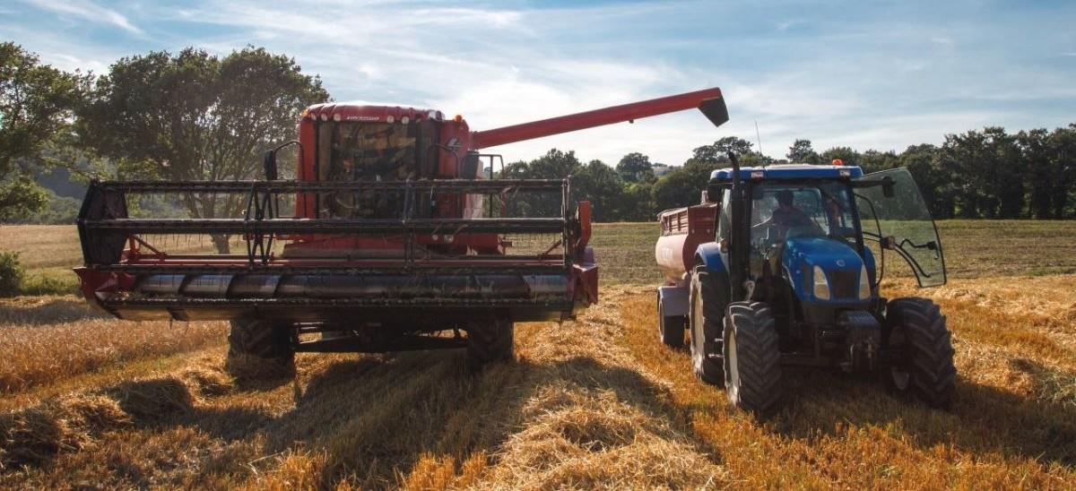 agricoltura-italiana-mietitrebbiatura-grano-paesaggio-rurale