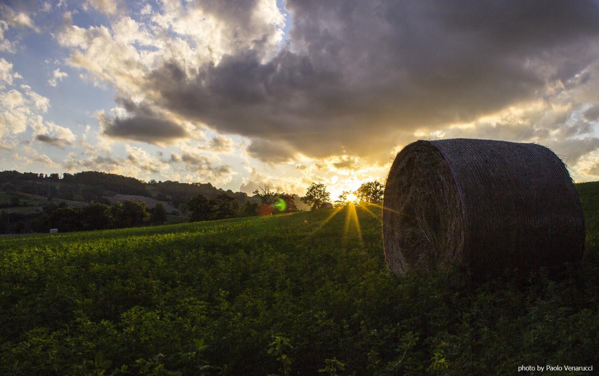 Agricoltura di qualità - Horizon 2020 - Europa