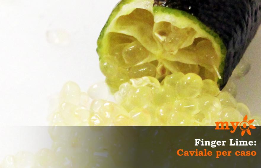 finger_lime_caviale_per_caso
